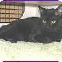 Adopt A Pet :: Elvira - Frederick, MD
