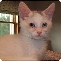 Adopt A Pet :: Gianna - Acme, PA