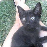 Adopt A Pet :: Gregor - Chowchilla, CA