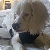 Adopt A Pet :: Caleb - Philadelphia, PA