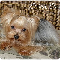 Adopt A Pet :: Beau Bear - Palm City, FL