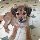 Adopt A Pet :: Berlyn