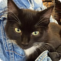 Adopt A Pet :: Tobie - Edmonton, AB