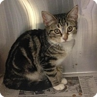 Adopt A Pet :: Clementine - East Brunswick, NJ