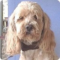 Adopt A Pet :: Auggie - Santa Barbara, CA