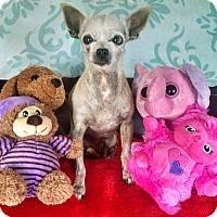 Adopt A Pet :: Carlita - San Diego, CA