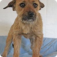 Adopt A Pet :: Grey - Waldorf, MD