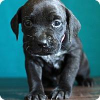 Adopt A Pet :: Atlanta - Waldorf, MD