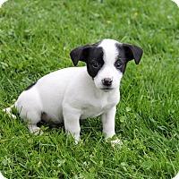Adopt A Pet :: Kors - New Oxford, PA