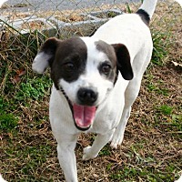 Adopt A Pet :: Hank - Erwin, TN