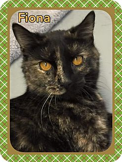 Calico Kitten for adoption in Atco, New Jersey - Fiona