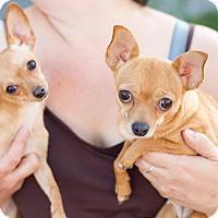 Adopt A Pet :: Margarita and Tater Tot - Allentown, PA