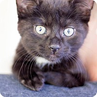 Adopt A Pet :: Wynken - Huntington, WV