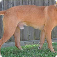 Adopt A Pet :: Ike - Cat Spring, TX