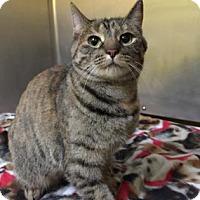 Adopt A Pet :: Cinna - Adrian, MI