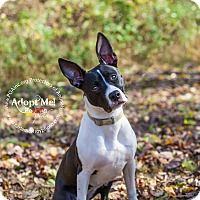 Adopt A Pet :: Panda - East Hartford, CT