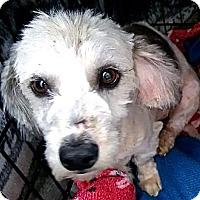Adopt A Pet :: Reggie - San Diego, CA