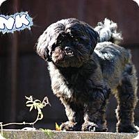 Adopt A Pet :: Tank #462 - Nixa, MO