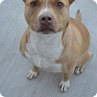 Adopt A Pet :: Smiley - Prince George, VA
