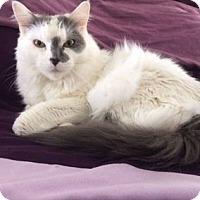 Adopt A Pet :: Sedona - Cheltenham, PA