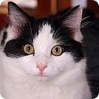 Adopt A Pet :: Twaine - Ventura, CA