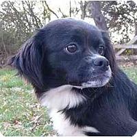 Adopt A Pet :: Jezz - Mocksville, NC