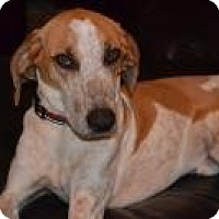 Adopt A Pet :: Buster ($300 adoption fee) - Ocala, FL
