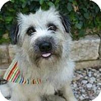 Adopt A Pet :: Blondie - Austin, TX