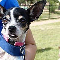 Adopt A Pet :: ELLIE MAE - AUSTIN, TX