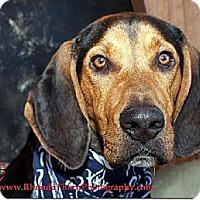 Adopt A Pet :: Gimmie Some Lovin' - Sacramento area, CA