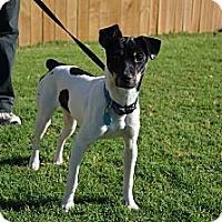 Adopt A Pet :: Peewee - Norman, OK