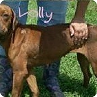 Adopt A Pet :: Lolly - South Park, PA