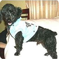 Adopt A Pet :: Jimi - Mooy, AL