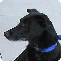 Adopt A Pet :: Harmony - Gilbert, AZ