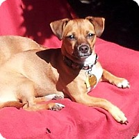 Adopt A Pet :: Sparkles - Kirkland, WA