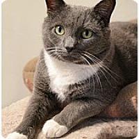 Adopt A Pet :: Belair - Milford, MA