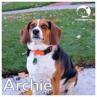 Adopt A Pet :: Archie - Novi, MI