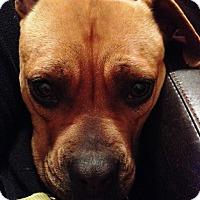 Adopt A Pet :: Zelda - Richmond, VA