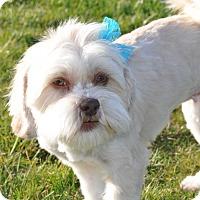 Adopt A Pet :: Hasel Grace - Tumwater, WA