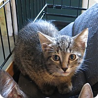 Adopt A Pet :: Danny - Geneseo, IL