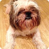 Adopt A Pet :: Dharma - Boulder, CO