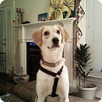 Adopt A Pet :: Ellie Mae - Midlothian, VA
