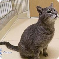 Adopt A Pet :: Carson - Merrifield, VA