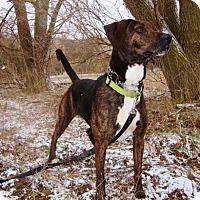 Adopt A Pet :: Brooke - Grafton, WI