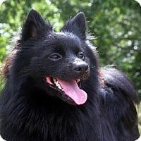 Adopt A Pet :: Tango - Dallas, TX