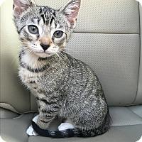 Adopt A Pet :: Fennel (ETAA) - Brattleboro, VT