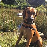 Adopt A Pet :: Laura - Seahurst, WA
