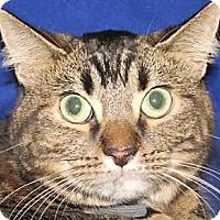 Adopt A Pet :: Dawn (Nala) - Germantown, MD