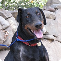 Adopt A Pet :: Dalton - Fillmore, CA