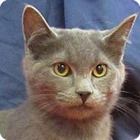 Adopt A Pet :: Casper - Lloydminster, AB